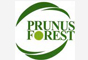 Prunus Forest